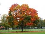 Alle Farben in einem Baum