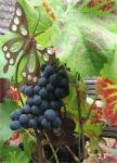 Gutes Weinjahr 2018 - auf der Dachterrasse