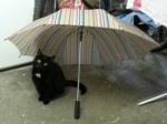 Lieschen mit Schirm