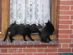 Lieschen & Lottchen (†) auf der Fensterbank