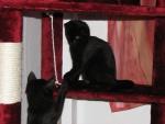 Lieschen & Lottchen (†) auf dem Katzenbaum