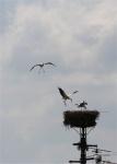Rückkehr zum Nest