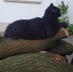 Lottchen (†) auf Baumstamm